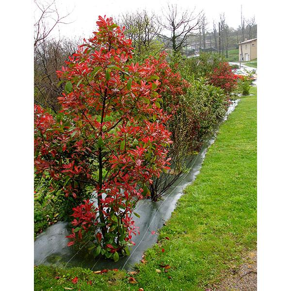 Taille de paillage marron geo paillis b 130 gr m2 for Cout amenagement jardin paysagiste